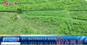 武平:首批百香果抢鲜上市 香飘全国