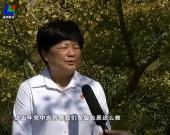 十九大代表沈腾香:及时传达十九大精神 带领村民建设更美乡村