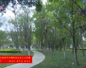 """龙岩人民广场:""""城市客厅""""添新绿"""