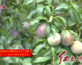 武平中山:抓好产业扶贫 促农脱贫增收