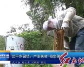 武平东留镇:产业扶贫 稳定脱贫