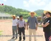 连城培田:中草药种植田园综合体项目进展顺利