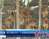 """武平捷文村:""""全国林改策源地""""的绿色崛起"""