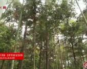 長汀:綠色生態助推林下經濟大發展