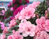 漳平永福西山村:以产业兴旺推动乡村振兴