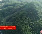 我市森林覆蓋率連續40年居全省首位