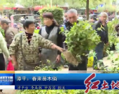 漳平:春来苗木俏