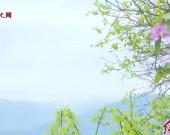 武平千鹭湖:清明踏青好去处