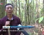 """武平万安捷文村:让林下经济成为老百姓的""""聚宝盆"""""""