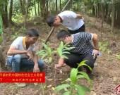"""漳平:发展""""林下经济"""" 助力乡村振兴"""