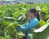 连城:依托特色农业优势   产业扶贫助力稳固脱贫
