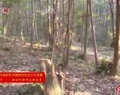 武平:用绿色转型破解林农发展难题