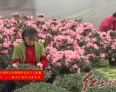 """漳平:做好""""花卉+""""文章助力产业提档升级"""