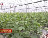 上杭湖洋:抢抓农时春耕忙 为全年生产打基础