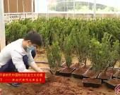 连城朋口:发展村级农民创业园 搭建脱贫致富好平台