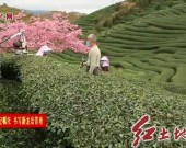 漳平:优服务抓落实 奋力谱写发展新篇章