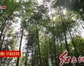 武平:深化林改绿色发展 决战决胜脱贫攻坚