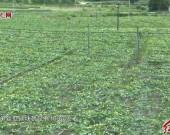 连城罗坊邱赖村:发展生态种植模式 稳固脱贫成果 壮大集体经济