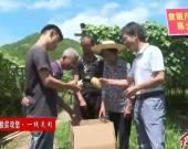 连城曲溪:精准施策兴产业 助农脱贫奔小康