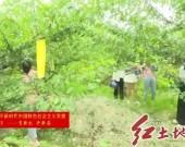 新羅大池:特色水果產業助力鄉村振興