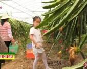 长汀:专业合作社助力乡村振兴