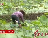 新罗岩山:创新扶贫机制 激发内生动力