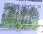 龍巖:守護綠水青山 實現百姓富生態美