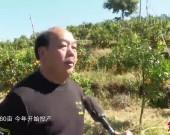 """新羅巖山:""""水果經濟""""激活鄉村振興內生動力"""