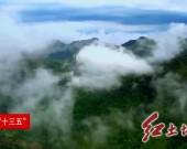 龙岩:创新林业金融产品 开辟绿色惠民途径