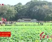上杭古田旅游景区:体验红色文化 感受田园风光 旅游安全又舒心