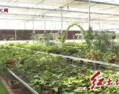 连城:创建农村区域化党建联盟 点燃乡村振兴发展新引擎