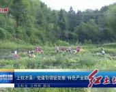 上杭才溪:党建引领促发展特色产业助振兴