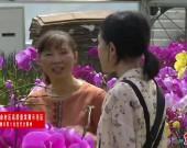 """上杭步云:小小蝴蝶兰 """"开""""出大产业"""