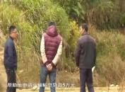 上杭县白砂镇:产业帮扶 助力脱贫