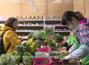 """龙岩中心城区:春节期间""""多肉新年礼盒""""萌翻花市"""