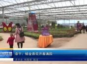 漳平:郁金香花开春满园