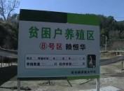 长汀:美西鹅养殖 精准脱贫新路子