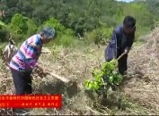 永定:推进乡村绿色发展转型农业信心足
