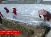 连城:抢抓天时做好甘薯扩繁育苗   备足种苗助力春耕生产