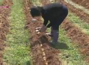 长汀童坊:大力发展竹荪产业 助力脱贫增收