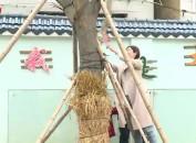 连城:开展亲子认养树木活动 环保理念从娃娃抓起