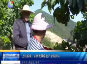 上杭临城:农民发展绿色产业有奔头