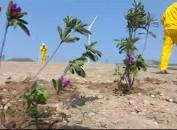 永定华润风电场:植树绿化 建设美丽风电场