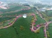 2018年中国漳平(永福)乡村半程马拉松赛将于3月18日举行