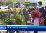 漳平:苗木市场购销两旺
