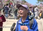 新罗小池培斜村:周末赏花踏青正当时 迎来首波周末游高峰