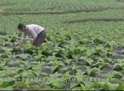 永定:加强技术指导 助农增产增收