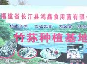 长汀:鸿鑫信用菌公司大力发展竹荪产业 助力脱贫增收