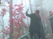 打造万亩红色杜鹃花旅游景区  发展乡村生态游助力乡村振兴