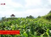漳平:产业链上建支部 示范引领促发展